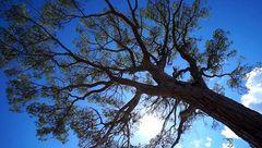 Au pied de mon arbre..!