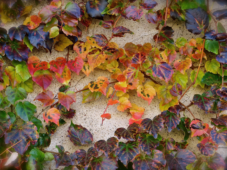 ... au revoir automne !!!...