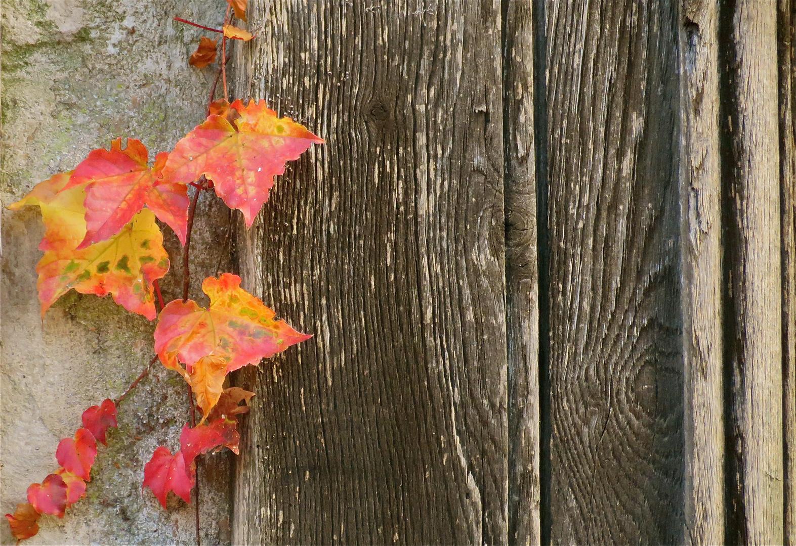 ... au revoir automne !!!...-2-