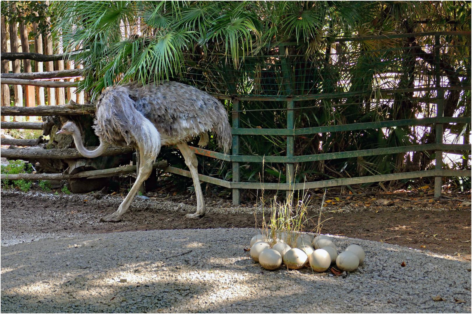 au zoo de pistoia .....