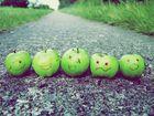 Auch Äpfel haben ein Leben...