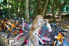 Auch Affen haben Durst ..................