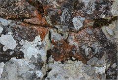 Auch auf den Felsen ...