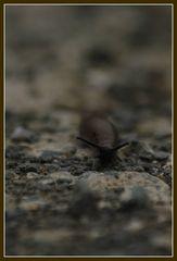 ...auch auf steinigem Weg die Ruhe bewahren....