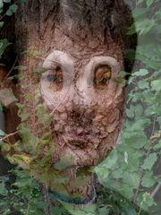 Auch Bäume haben eine Seele