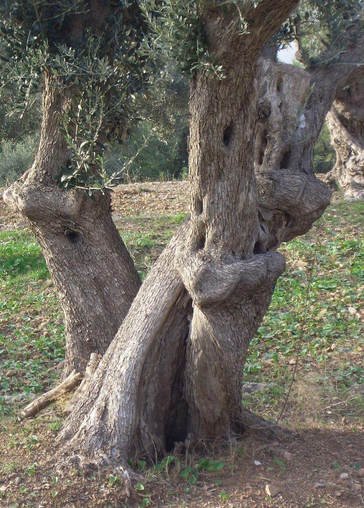 Auch Bäume können ihre Liebe zeigen