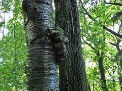 Auch Bäume können sehen