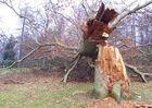 Auch Bäume sterben