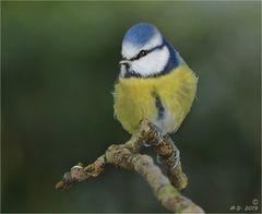 Auch Birdy ...