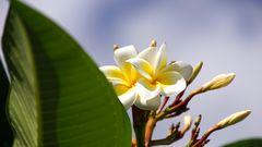 Auch Blumen gibt´s auf La Reunion.