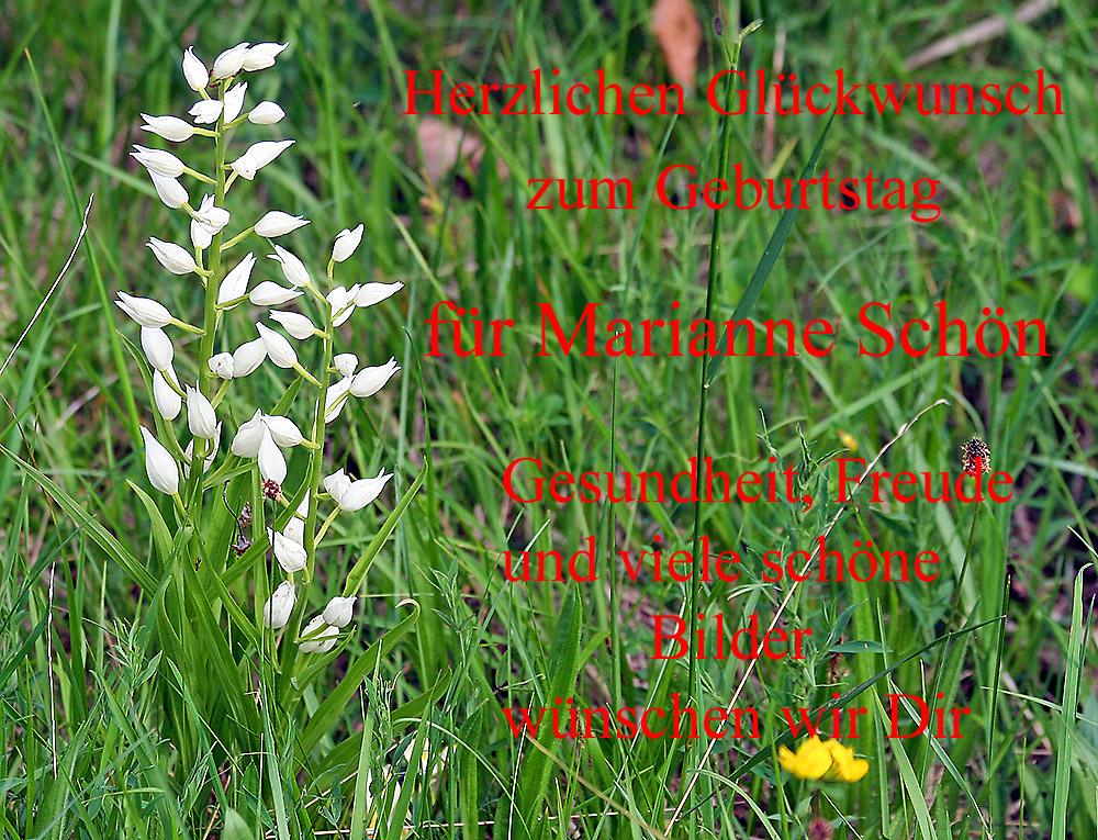 auch das waldv glein als seltene orchidee gratuliert marianne sch n foto bild pflanzen. Black Bedroom Furniture Sets. Home Design Ideas