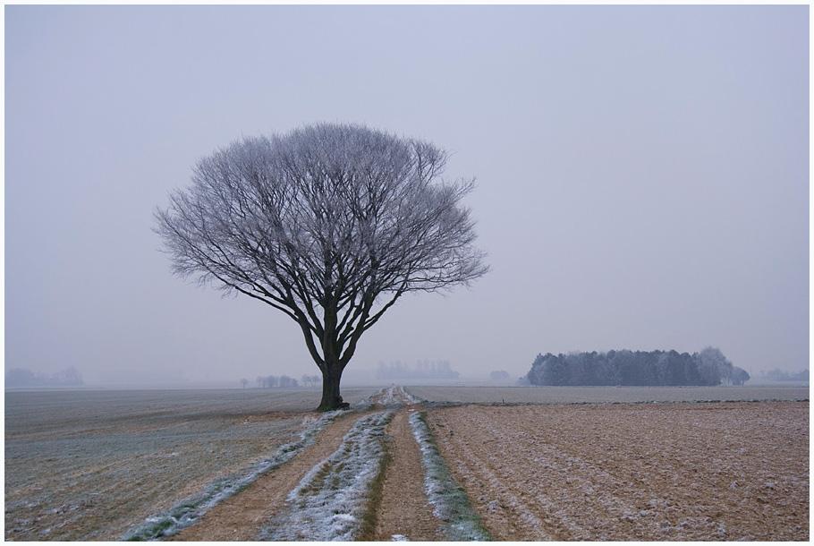 Auch dem Baum ist kalt!