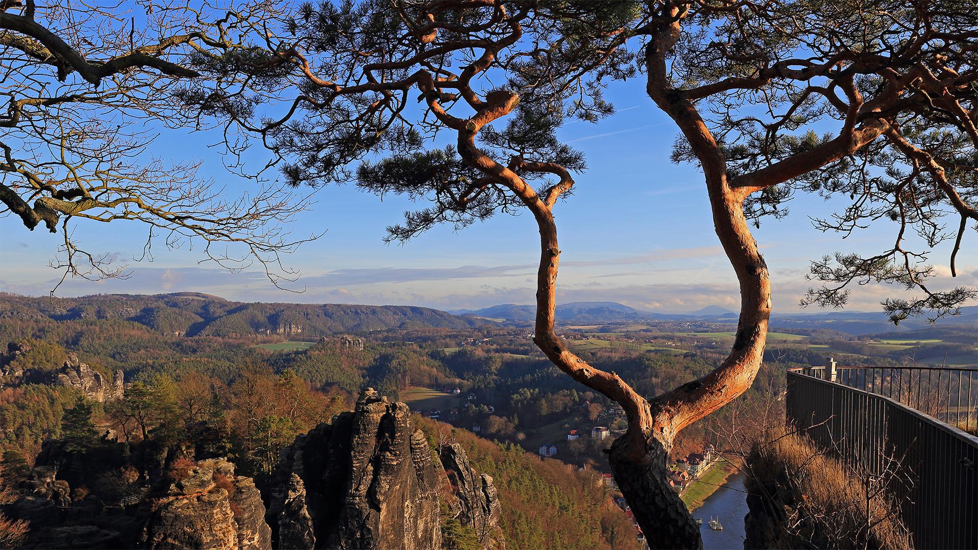 Auch dem zweiten Baum auf der Basteiaussicht darf nichts zustoßen...