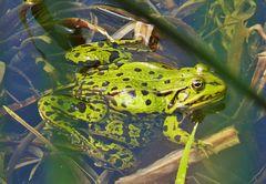 Auch der Frosch genießt die jetzt höheren Temperaturen
