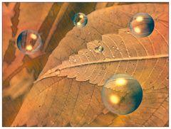 Auch der Herbst zeigt Charme