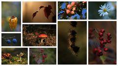 ...auch der oberfränkische Herbst ist bunt und schön.....