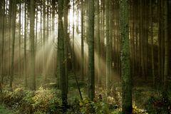 Auch der Wald erwacht