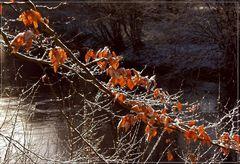 Auch der Winter hat seine schönen Seiten