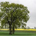 auch die Bäume werden grün