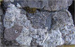 Auch die kleinsten Felsenbewohner ...
