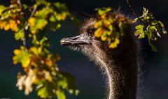 Auch die Tiere haben Herbst...#1631##