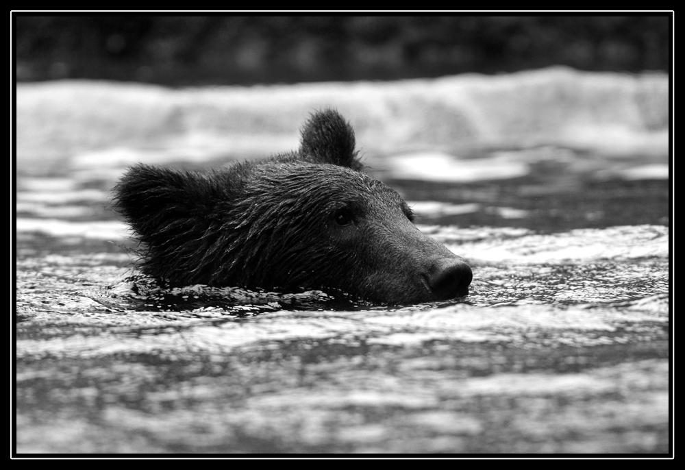 auch ein Bär erfrischt sich mal