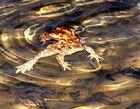 Auch ein Froschleben hat seine Höhepunkte