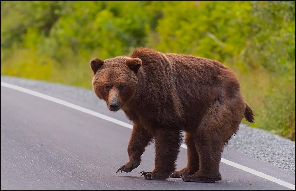 auch ein grizzly. . . .