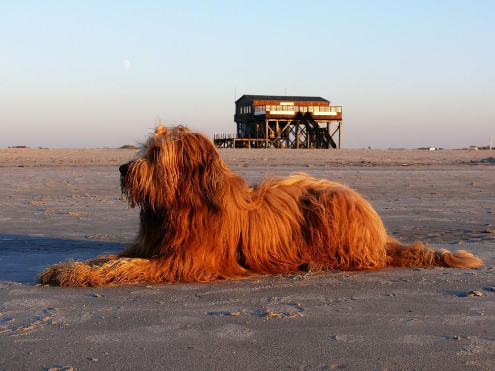 Auch ein Hund braucht mal Urlaub