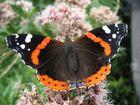 Auch ein Schmetterling braucht mal eine Pause