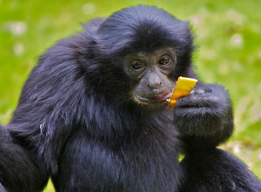 Auch ein Stück Banane?