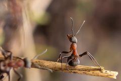 Auch eine Ameise muß sich