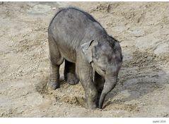 Auch Elefanten können...