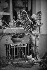 auch Engel