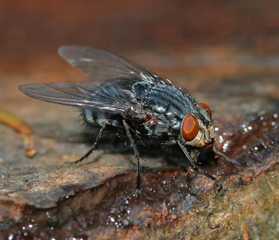 Auch Fliegen haben Durst....