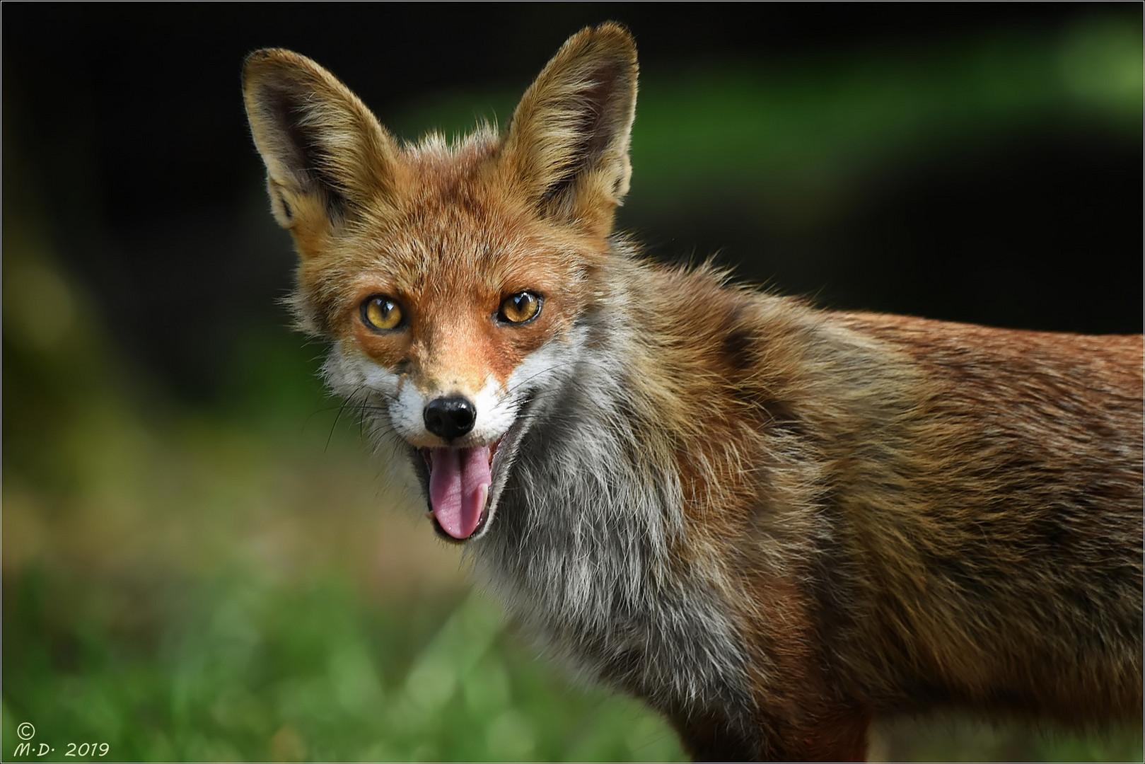 Auch Foxi ...