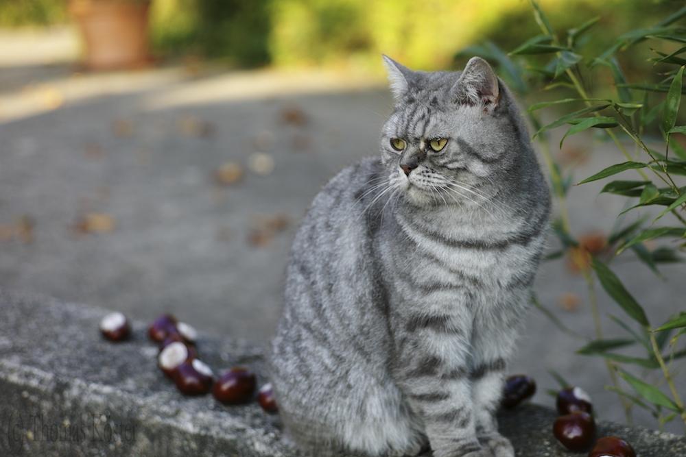 auch für Kitty kommt der Herbst