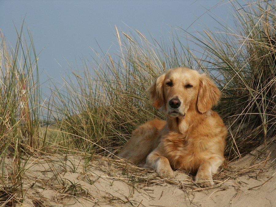 Auch Hunde fahren in den Urlaub ....