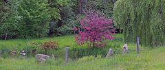 Auch im Frühjahr sind diese liebevoll gestalteten kleinen Teiche...