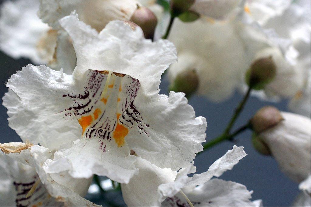 Auch Im Juni Blühen Noch Bäume Foto Bild Pflanzen Pilze