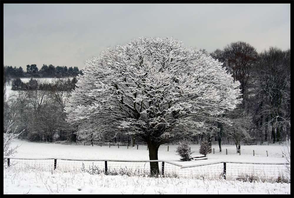 Auch im Rheinland sieht es manchmal winterlich aus