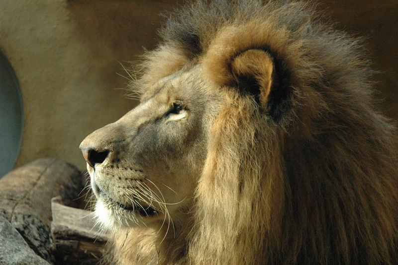 Auch im Zoo bin ich der King