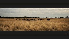 auch in Botswana