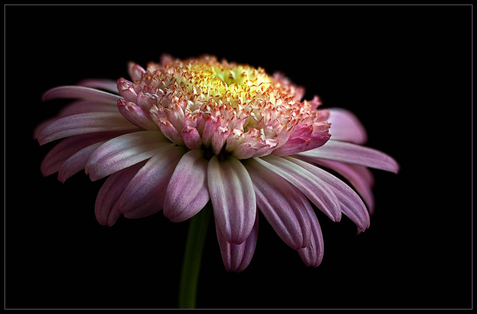 Auch in den kleinsten Blumen zeigt die Natur ihre Schöpferkraft
