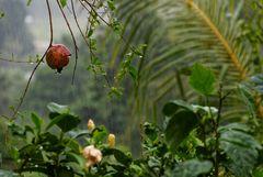 Auch in den Seychellen regnet es manchmal