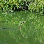 Auch in diesem überdüngten See...