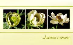 Auch in Grün-Weiß eine Schönheit