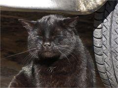 Auch Katzen genießen die milde Frühlingssonne