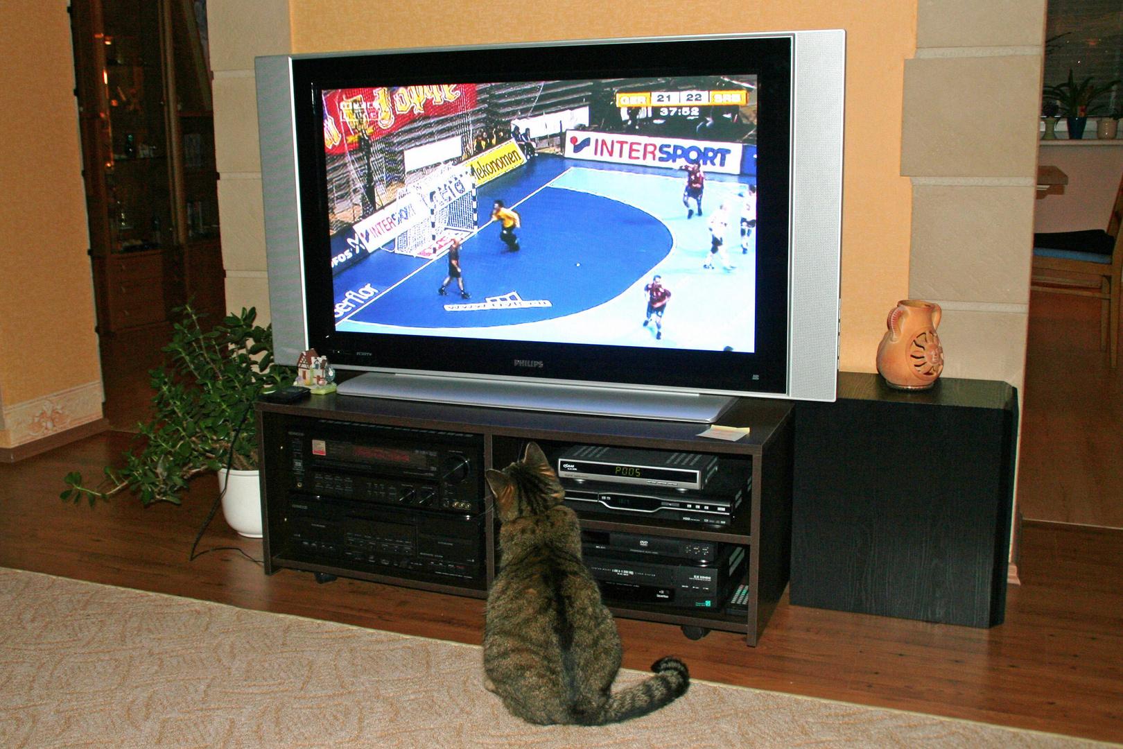 Auch Katzen interessieren sich für Handball