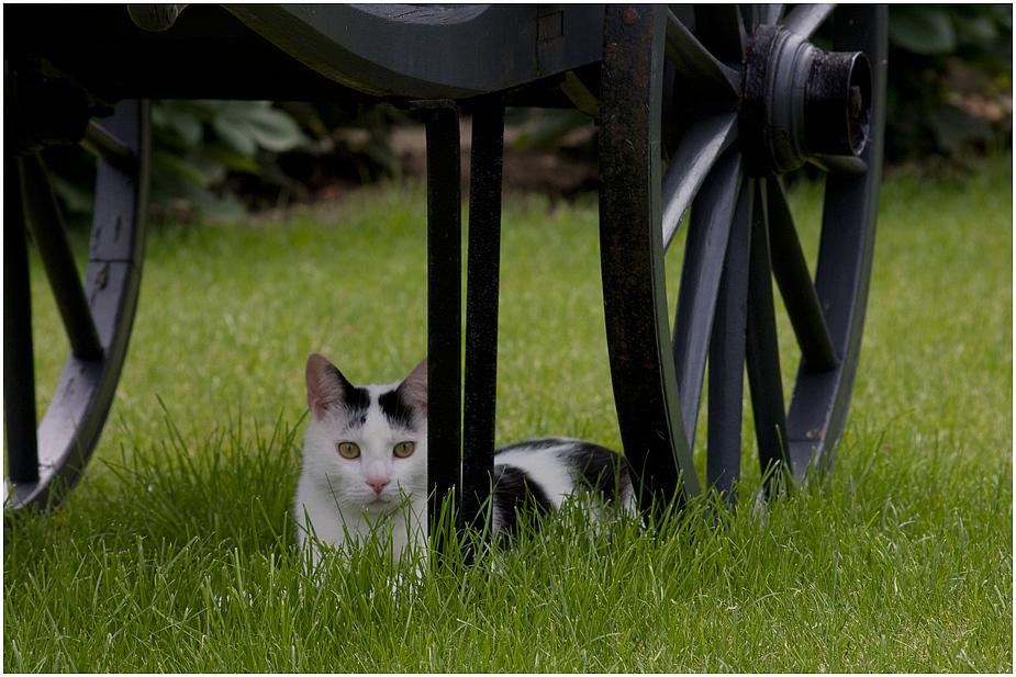 auch Katzen lieben Frühling